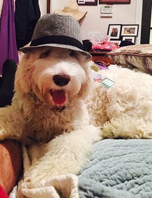 Grooming Australian Labradoodles in Richmond, Kentucky (KY)
