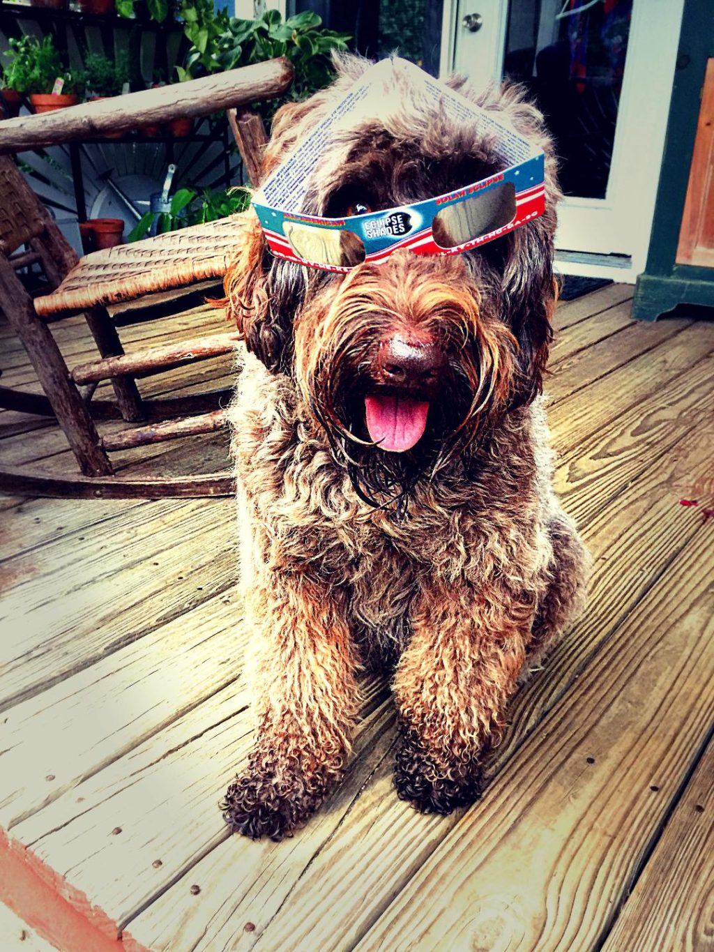 About Us and Our Australian Labradoodle Puppies Near Richmond, Kentucky (KY) like Stormie on Deck
